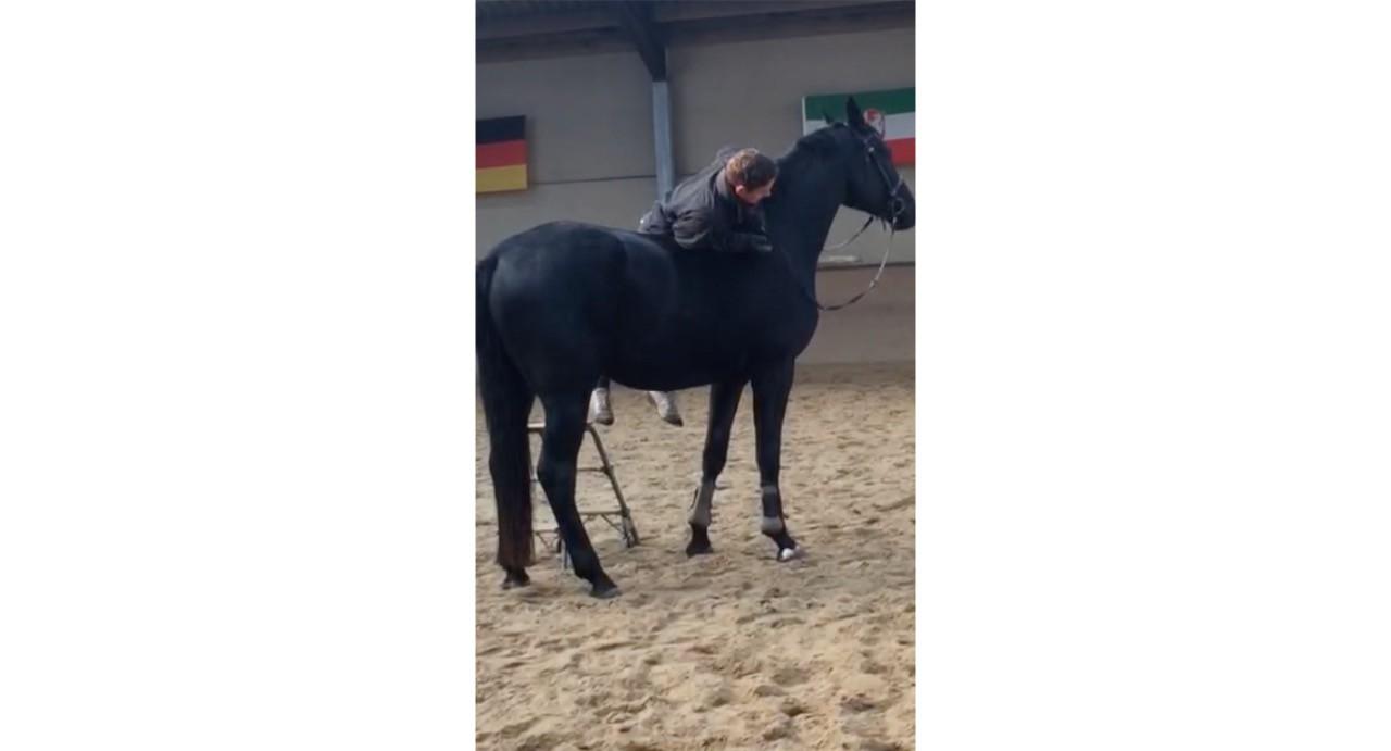 Junge Pferde sind unsere Leidenschaft